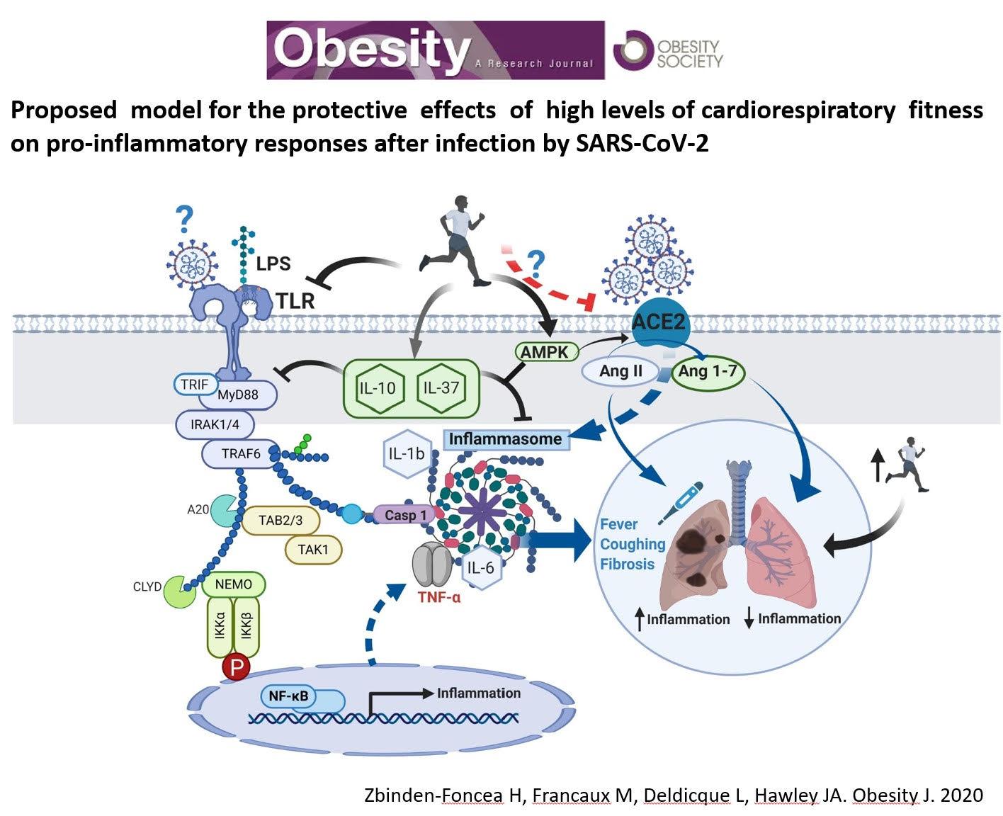 articulo revista obesity