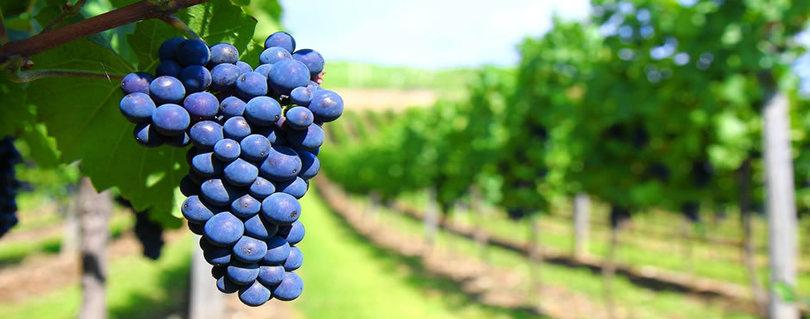 Destacada participación de alumnas de la Clínica Jurídica PYME en causa de arbitraje NIC Chile que enfrentó a pequeña botillería rural con gran empresa vitivinícola