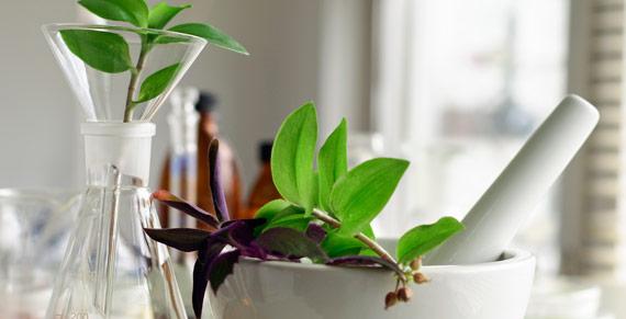 Plantas medicinales y fitoterápicos de uso frecuente en clínica